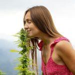 Jak rozpocząć hodowlę marihuany?