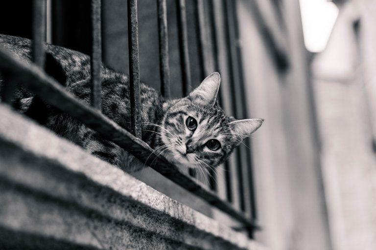 Balkonowe zabezpieczenia dla kotów – podstawowe informacje