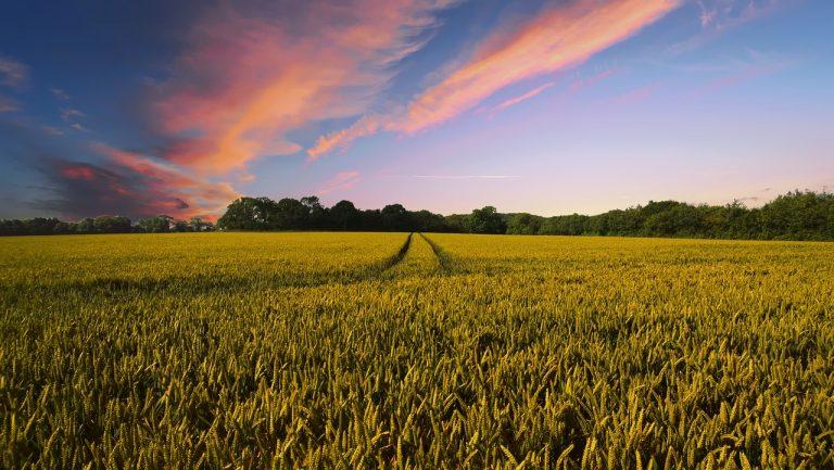 Jak szukać sprawdzonych informacji rolniczych?
